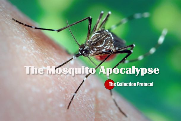 The Mosquito Disease Explosion: Experts warn the Yellow Fever outbreak in Africa is a ticking time bomb
