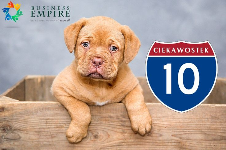 10 najmądrzejszych ras psów