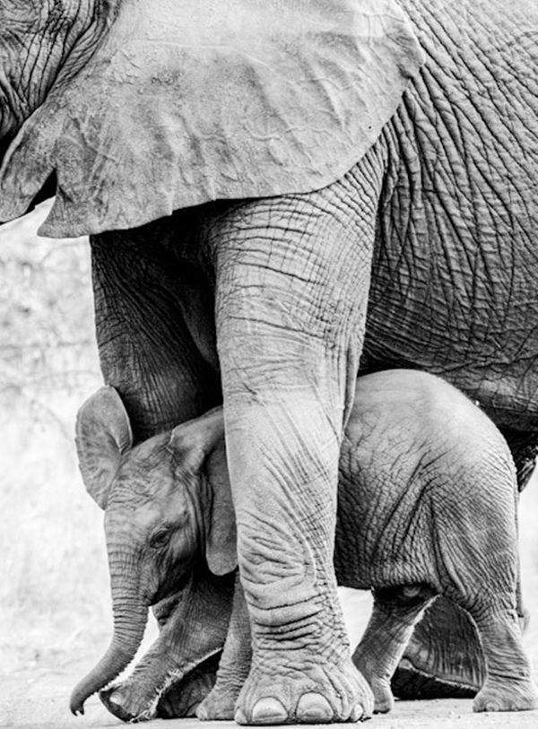 Gorongosa National Park:  It is located in the province of Sofala, at the southern end of the Great Rift Valley of East Africa.-- Elephants: