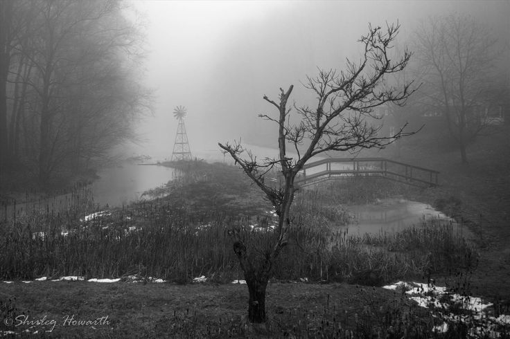Foggy by Shirley Howarth on SnapThePlanet.com
