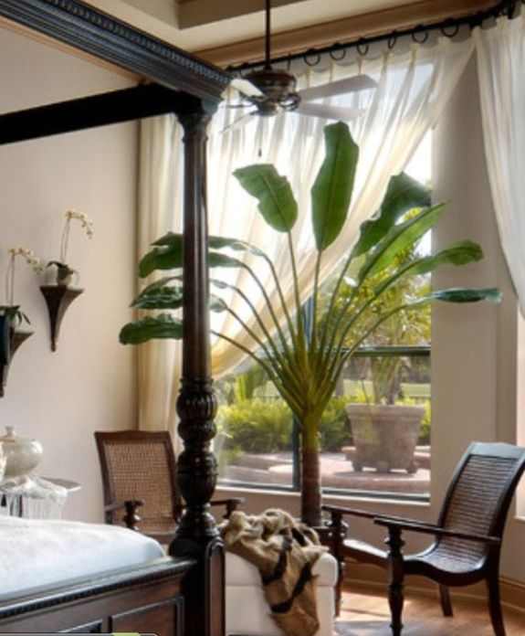 British Colonial Bedroom: Traveler's Palm And Curtain Rod
