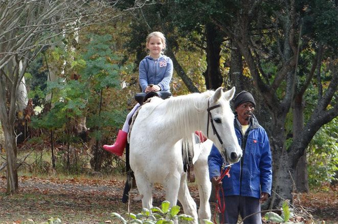 Take the kids for a wonderful pony ride at the beautiful Tokai Forest Market which is on every weekend in Tokai, Cape Town.