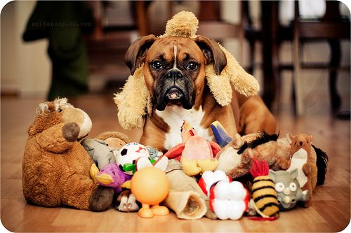 """""""I happen to know a thing or two about toys and I can tell you that I certainly do NOT have enough!"""""""