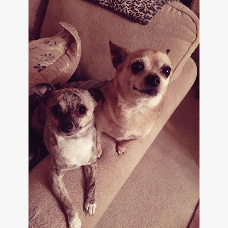 Chilli and Lola