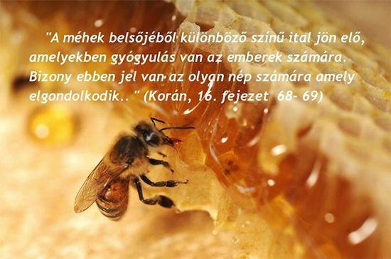 """Apiterápia - a méz és az ő hatása..  Az apiterápia egy nagyon régóta ismert és alkalmazott természetes gyógymód, ami mostanság Magyarországon is reneszánszát éli, mind többen ismerik és használják. A szóösszetétel első része az """"api"""" szó a méhre utal, a """"terápia"""" pedig kezelést jelent, tehát az apiterápia a méhek által termelt anyagokkal való kezelés. tovább: http://soulonefonix-termeszetesegeszseg.blogspot.hu/"""