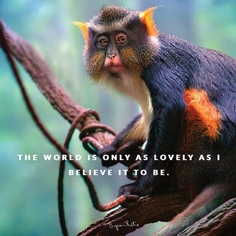 The world is only as lovely as I believe it to be. - Byron Katie