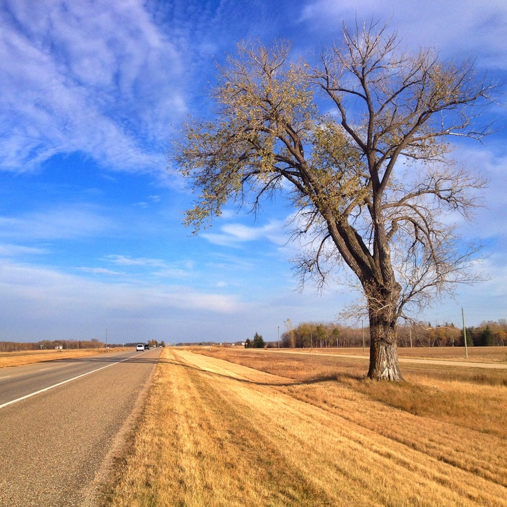 The one-hour tree is halfway between Winnipeg and Brandon. Shot this in the fall.