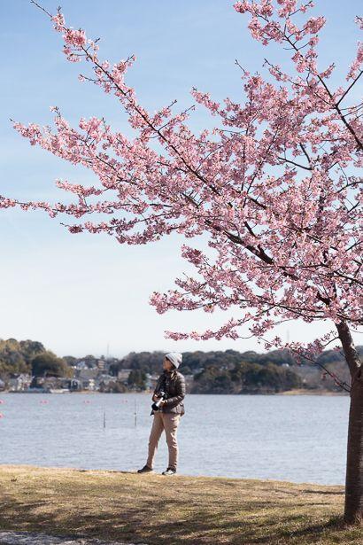 河津桜の開花につられて メジロも家族連れも佐鳴湖に集っています。 その姿をカメラを通して見てきま...