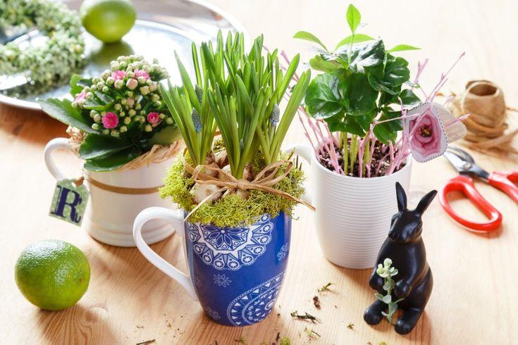 Hrnečky nemusí dělat radost jen v kuchyni. Spojte je s květinou a získáte dokonalý dárek nebo dekoraci.