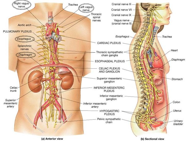 Vagus Nerve Function | Why Baker Chiropractic Will Help With a Hiatal Hernia
