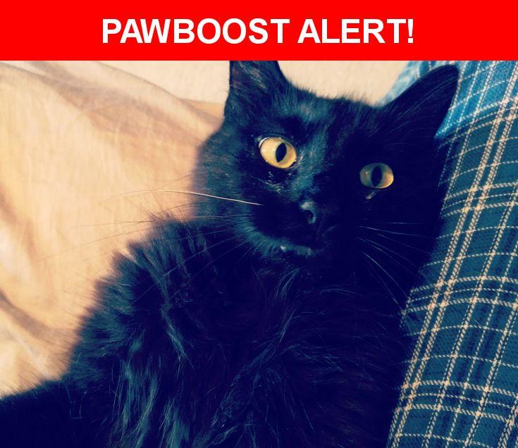 Please spread the word! Kitty was last seen in Brandon, FL 33510.    Nearest Address: 2470 Lake Woodberry Circle, Brandon, FL, United States