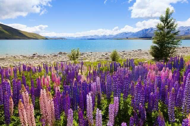 Make Lake Tekapo a 'must do' in the South Island