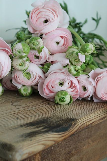 Pink Ranunculus. I had these in my wedding bouquet. my favourite flowers.