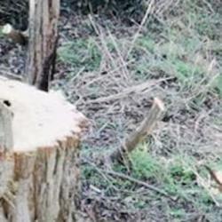 Cronaca: #Scempio a #Roma tagliano alberi secolari in oasi protetta: rom arrestati (link: http://ift.tt/2iOJAbO )