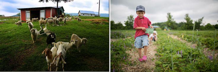Ферма для жизни «МАРК и ЛЕВ»