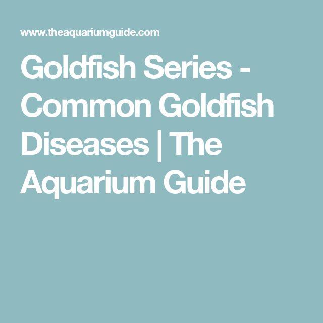 Goldfish Series - Common Goldfish Diseases | The Aquarium Guide