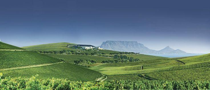 Durbanville Hills - Table Mountain on the horison.
