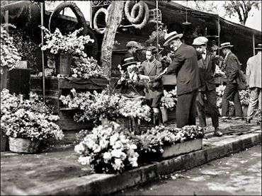 flower shops at Syntagma λουλουδάδικα στην Αθήνα