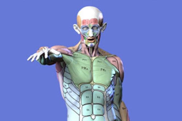 The 126 best Body Art images on Pinterest   Body paint, Body ...