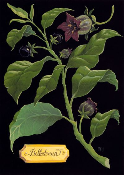 Deadly Nightshade, print from Society 6. Part of the Poisonous Plants series by Britt Wilson.