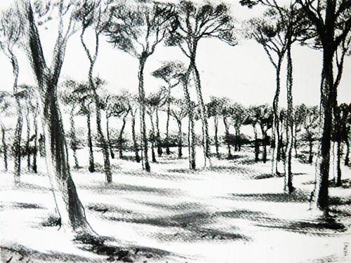Doria Pamphili / Kohlezeichnung, 40 x 30 cm, 2015