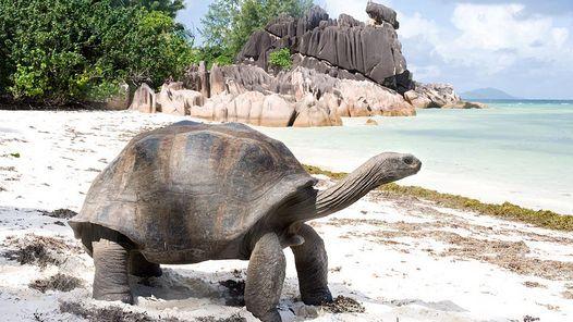 Tortugas gigantes en el atolón de Aldabra, Seychelles Esta pequeña franja de arena que forma una especie de rectángulo en pleno océano Índico es el hogar de más de 150.000 tortugas gigantes, la mayor población de este reptil en el planeta, que aquí viven en paz, en una tierra escasa y prácticamente inalterada por los humanos