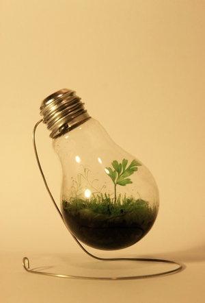 Green in Green - Recycled Light Bulb Terrarium