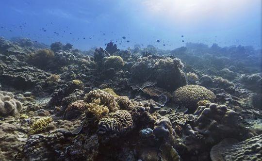 La Prensa de Nicaragua: Calentamiento global causará cambios importantes en la bio diversidad marina. Despues de leer en tu diario de Reflexion escribe Dos posibles soluciones a este problema (12 lineas incluyendo palabras de transición compuestas) Actividad por M. Melara