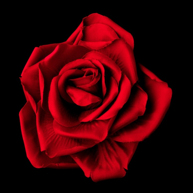 red rose for Valerie | V for Vendetta | Pinterest
