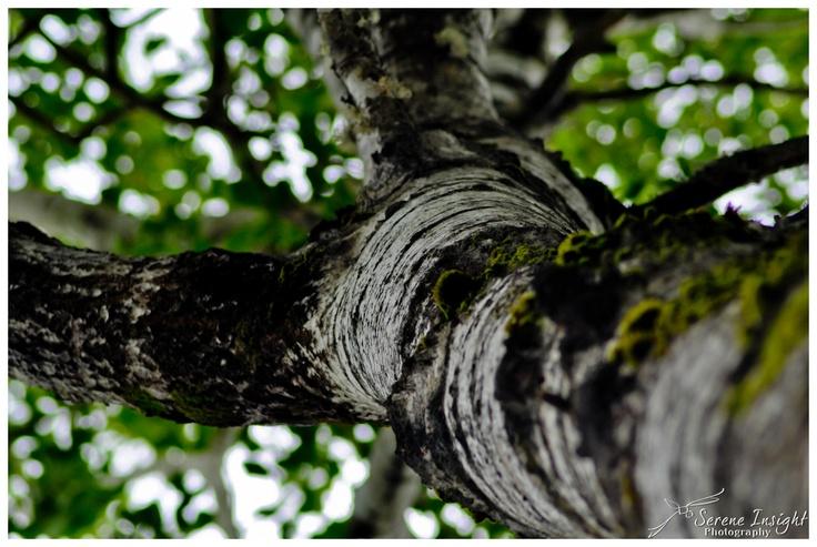 Bark... or Tree...