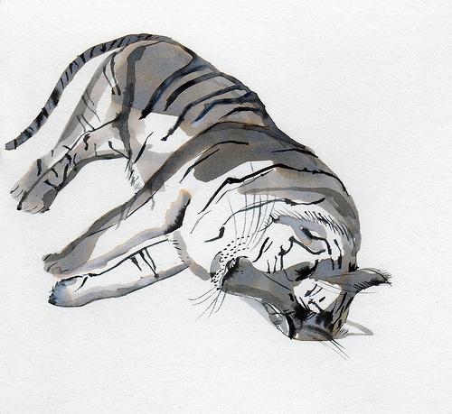 tiger sleeping  kaye blegvad