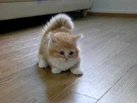 Can I have one? It's called a Munchkin Cat. : ):