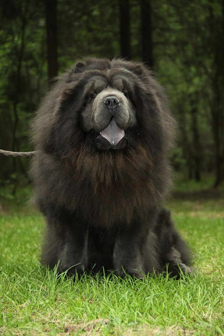 Watch More Large Dogs Wag Their Big Tails Here