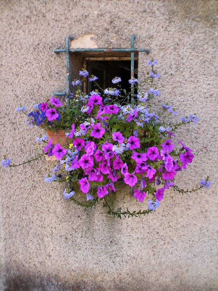 Pequena janela com flores lilases.  Fotografia: Annina - anna.deho no Flickr.