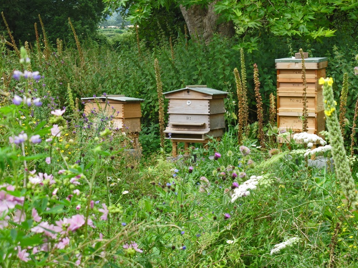 Bee hives in a wildflower meadow