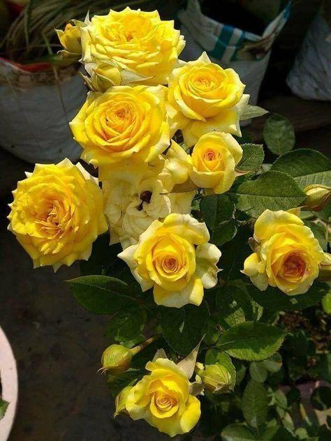 Pin By Eliza On Flowers Gallery Pinterest Beautiful Flowers