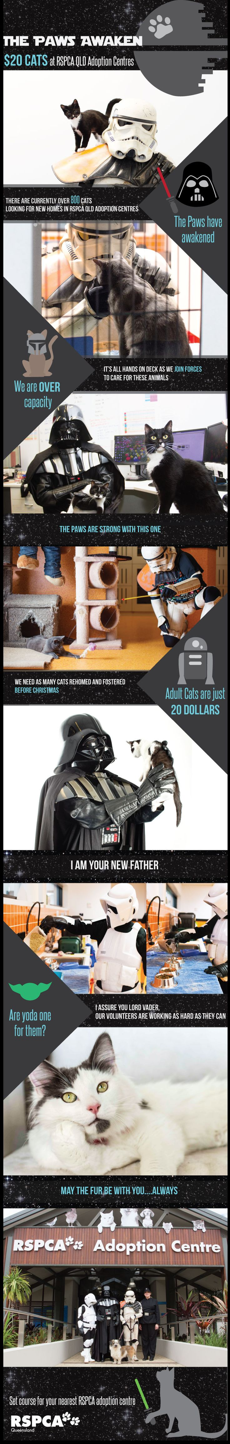 The Paws Awaken at #RSPCA Queensland. #Adopt an Adult Cat for just $20 until December 31, 2015.  #starwars #cats #rspcaqld
