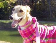 It's greyhound adoption month! Celebrate by repinning! http://www.grey2kusa.org/action/adopt.html: It S Greyhound, Adoption Month, Random Fun Ness, Greyhound Adoption
