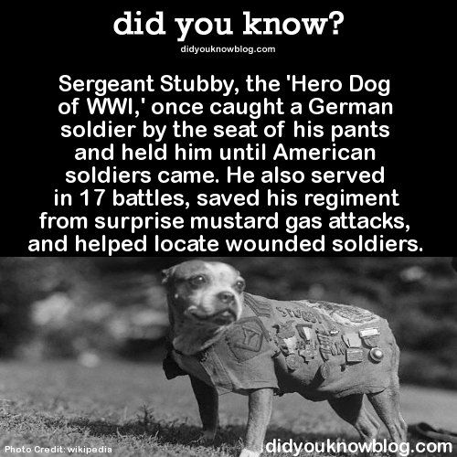 Yes... I did know about this hero dog who was first taken in a stray. Adopt your own hero today!