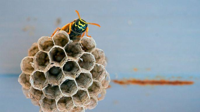 29dd1433f3982cdee7e0c1fc5dd8a980 - How To Get Rid Of Small Paper Wasp Nest