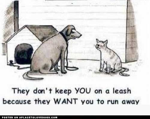 A Dog's Perspective: Funny Dogs, Dogs Cat, Pet, Quote, Funny Stuff, Smile, Dogcat, Hate Cat, Cat Lovers