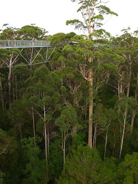 The Tree Top Walk at the Valley of the Giants, western Australia (by Steffen und Christin).
