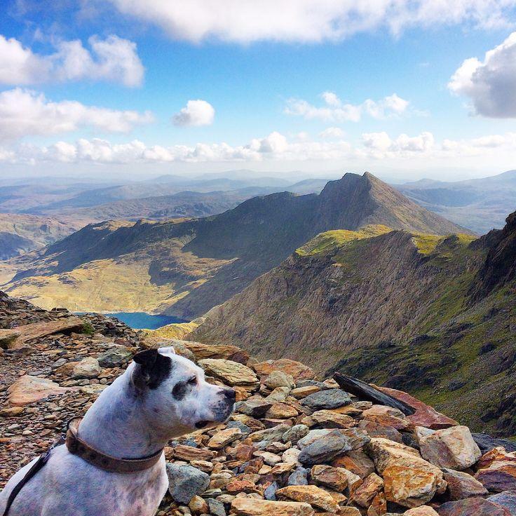 Snowdon, snowdonia, Wales, mountain, staffy, Staffordshire bull terrier,