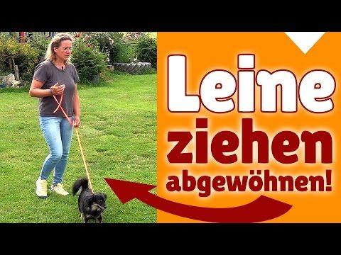 ►► Hundespiele ✔ Sinnvolle Hunde Spiele beim Gassi gehen - Stephanie Salostowitz ✔✔ - YouTube