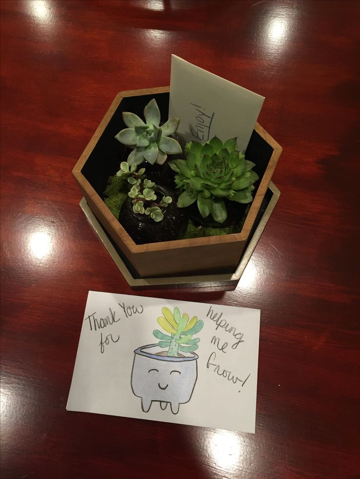 Supervisor gift: Easy diy succulent garden with gift card and thank you note. Succulent box, jars, and moss found on sale at hobby lobby.