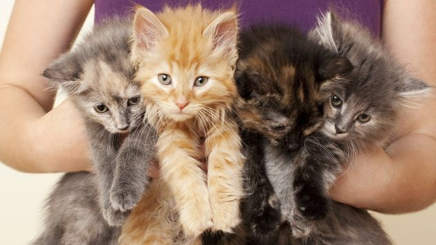 This Drought May Be Having Some Very Weird Side Effects Cats Kittens Cute Cats