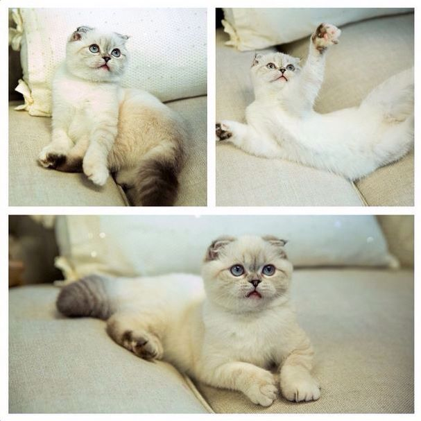 Community Post: 22 Things Taylor Swift's Cats Are Definitely Thinking