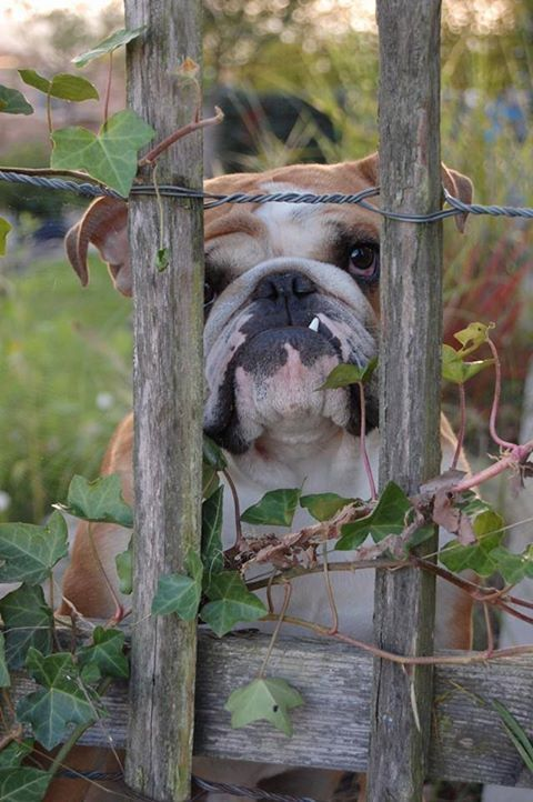 Lucy is in lock-down after digging up all Mama's new garden plants. Go play in the back yard, young lady...   ~~ Houston Foodlovers Book Club