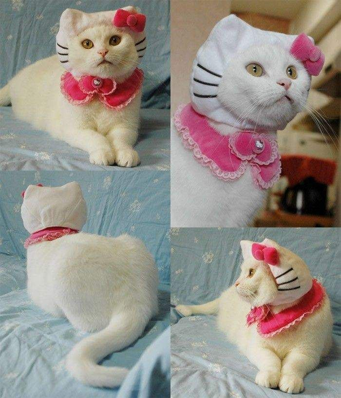"""Funny Kitty Cat 