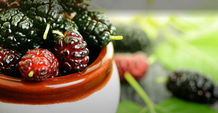 Veja quais são os benefícios do chá de amora e amplie seu leque de soluções naturais para prevenir e tratar doenças!